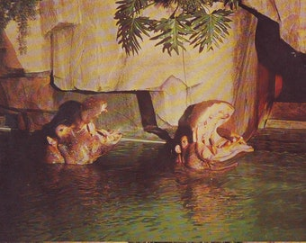 Polar Bears Milwaukee County Zoo Photo Postcard Undated 21120