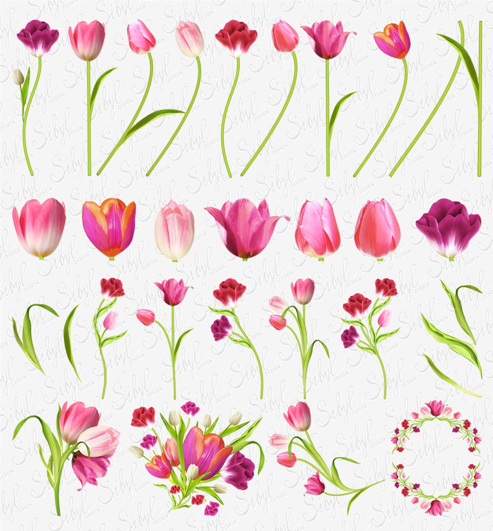 60 Off Sale Digital Tulips Clipart Spring Flower Clip Art Floral