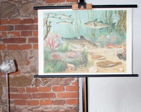 Wall chart, Under the sea, fish, 1953