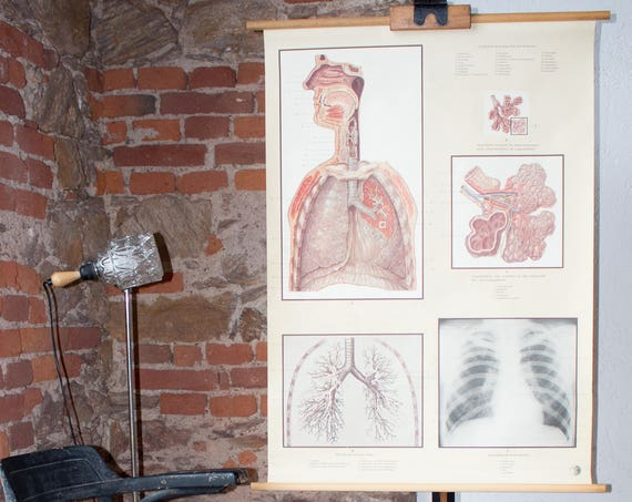 Wall Chart, human body, lung, published by Deutsches Hygiene Museum, 1961