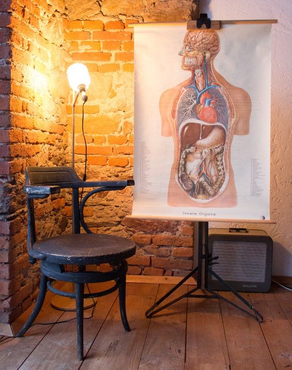 Wall Chart Human Body Internal Organs Published By Etsy