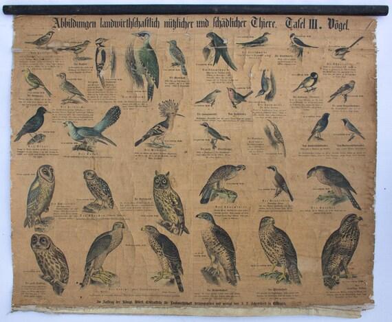 Useful and harmful animals, wall chart, birds, Offsetdruck von J. F. Schreiber, Prof. Dr. Gust. Jäger / Dr. Ernst Hofmann, 1899