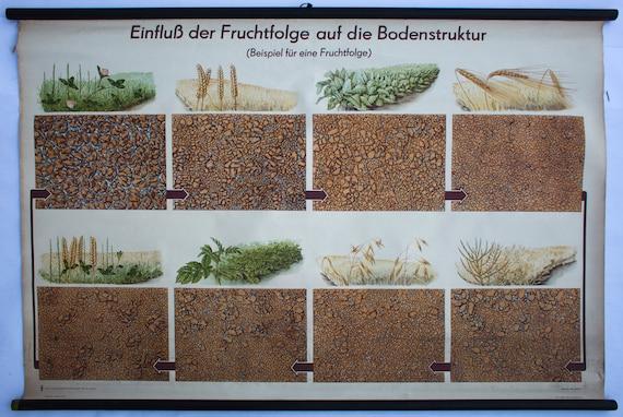 Soil structure, school wall chart, wall chart, 1953