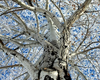 Tree Photography, Nature Photography, Winter Photography, Winter trees, up close nature
