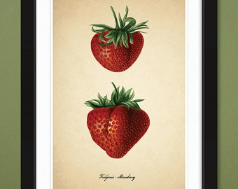 Strawberry — 1889 – USDA Pomological Watercolor Collection (12x18 Heavyweight Art Print)