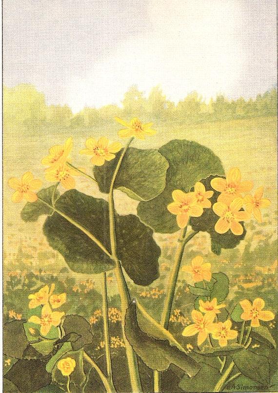 """1926 Vintage GARDEN FLOWER /""""DAHLIA/"""" GORGEOUS COLOR Art Print Lithograph"""