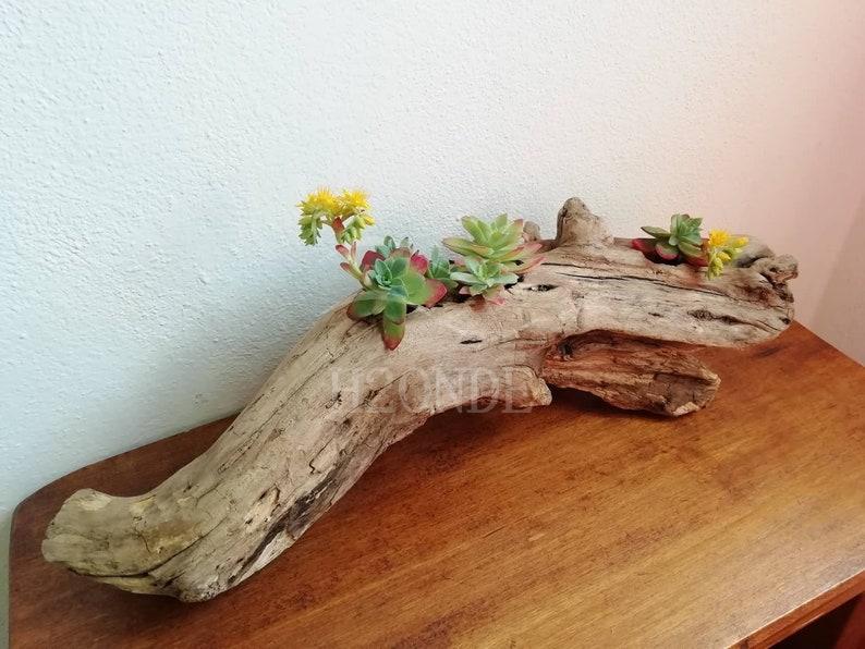 Succulent plant holder driftwood display air plants cacti wedding centerpiece outdoor decor patio wood boho stand garden rustic farmhouse