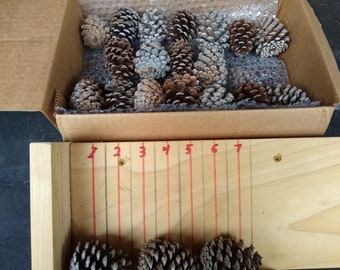 1 1/2 inch Georgia Pine Cones (84 QTY) FREE SHIPPING