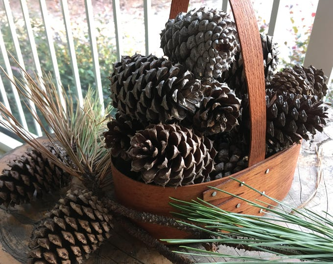 """Featured listing image: 3"""" Georgia Loblolly Pine Cones (45 QTY)"""