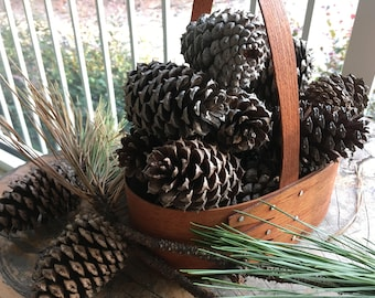 4 inch Georgia Loblolly Pine Cones (6 QTY) FREE SHIPPING
