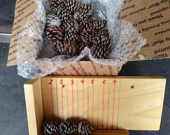"Miniature Georiga Pine Cones (1 1/2"" +- 1/4"")   (80 QTY)  FREE SHIPPING"