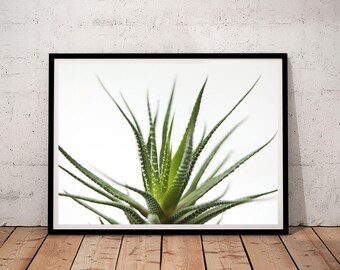 succculent print, Cactus print, digital art, printable art, printable, art print, printable wall art, digital prints, downloadable, prints