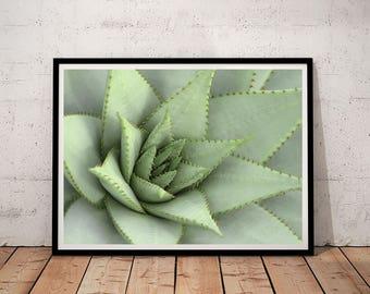 succculent print, cactus print, cactus printable, succulent printable, printable wall art, digital prints, downloadable prints, printables