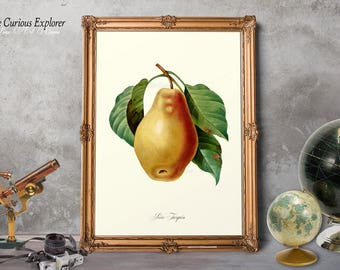 Pear Art Prints, Pear Kitchen Decor, Pear Art Poster, Fruit Art Decor, Home Fruit Wall Art, Old Fruit Art, Pear Fruit Print - E11_5