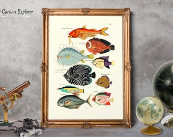 Funny Fish Art Decor, Baby Girl Fish Print, Nursery Art Print, Fish Decor Idea, Aquatic Art Prints, Fish Print Boss Gift - E21_9