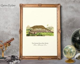 Ant Eater Decor, Cool Animal Poster, Ant Eater Child Gift, Animal Nursery Decor, Ant Eater Girl Gift, Ant Eater Poster - E18_94