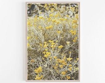 Wildflower Print, Flower Print, Yellow Gray Wall Art, Yellow Wall Art, Floral Art, Wildflowers, Yellow Art Print, Photography, Flower Art