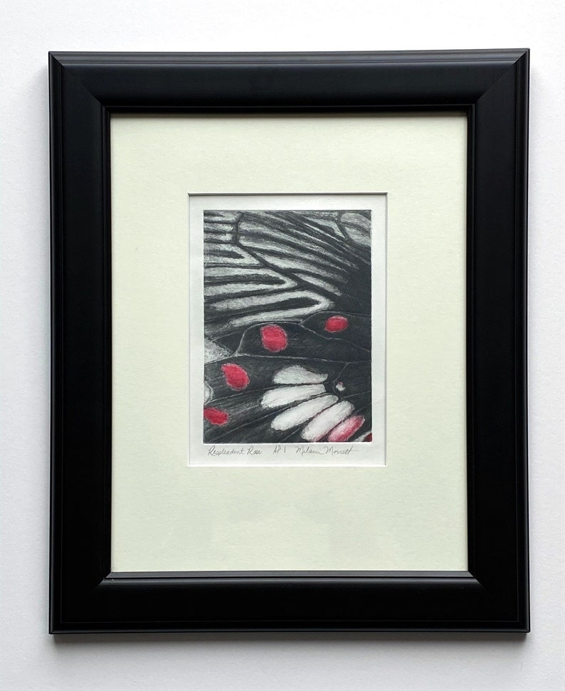 Resplendent Rose Butterfly art fine art contemporary image 1