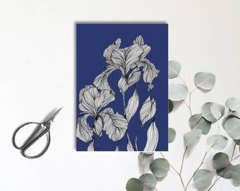 Iris Mauve- plante fleurie aux jolies nuances- Carte postale illustrée - dessin à la main - tirage numérique en couleur - monocotylédone