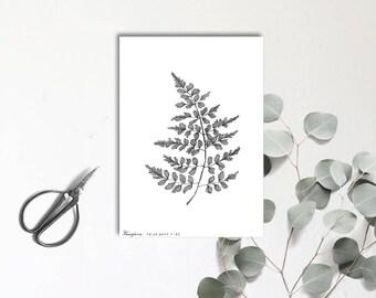 Fougère - Carte postale illustrée - Dessin à la main - tirage numéroté et limité - monocotylédone