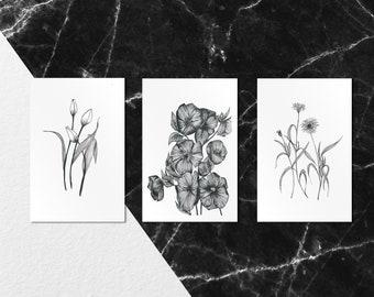 Lot Surprise - coffret de trois cartes au format postal et au tirage limité et  numéroté - Illustrations Botaniques - monocotylédone