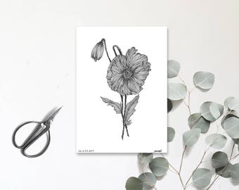 Fleur de Pavot - Carte postale illustrée - Dessin à la main - tirage numéroté et limité - fleur de printemps - monocotylédone