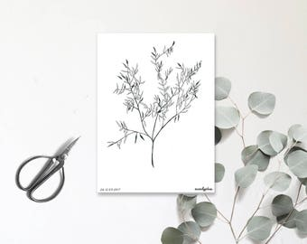 Eucalyptus - Illustrated postcard - Hand drawing - numbered and limited edition - tree with invigorating scents - monocotylédone