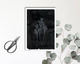 Wax Flower - Carte postale illustrée - Dessin à la main - tirage limité et numéroté - monocotylédone