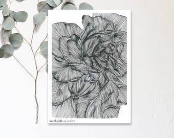 Rose de Jardin - Dessin Illustration réalisé à la main - Affiche  botanique - Exemplaire en tirage limité et numéroté - monocotylédone