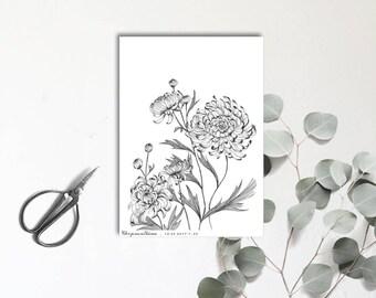 Chrysanthème - Carte postale illustrée - Dessin à la main - tirage numéroté et limité - monocotylédone