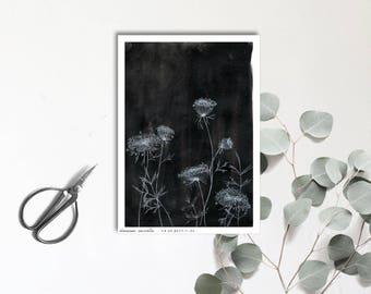 Carte postale illustrée - Dessin à la main - Daucus Carota - tirage limité et numéroté - monocotylédone