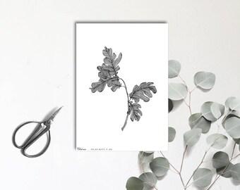 Chêne - arbre majestueux - Carte postale illustrée - Dessin à la main - tirage numéroté et limité - monocotylédone