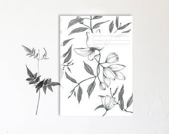 Notebook botanique- monocotylédone - Dessin végétal réalisé à la main - cahiers de note - Clématite montana