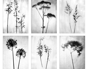 Botanical and Floral Art