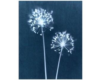 Indigo Blue Dandelion Cyanotype Giclee Print, Minimalist Botanical Wall Art, Floral Farmhouse Decor