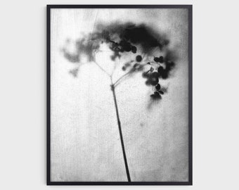 Black and White Hydrangea Photography Print, Rustic Botanical Farmhouse Wall Art, Fine Art Paper or Canvas