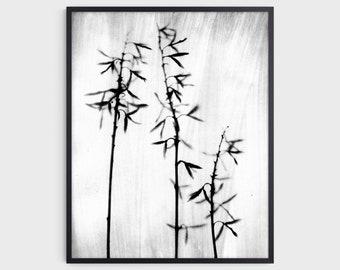 Black & White Botanical Photography Print, Rustic Farmhouse Wall Decor, Fine Art Paper or Canvas