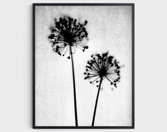 Black and White Dandelion Photography Print, Minimalist Botanical Wall Art, Rustic Farmhouse Decor