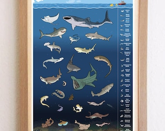 Poster with great white shark, manta ray and more