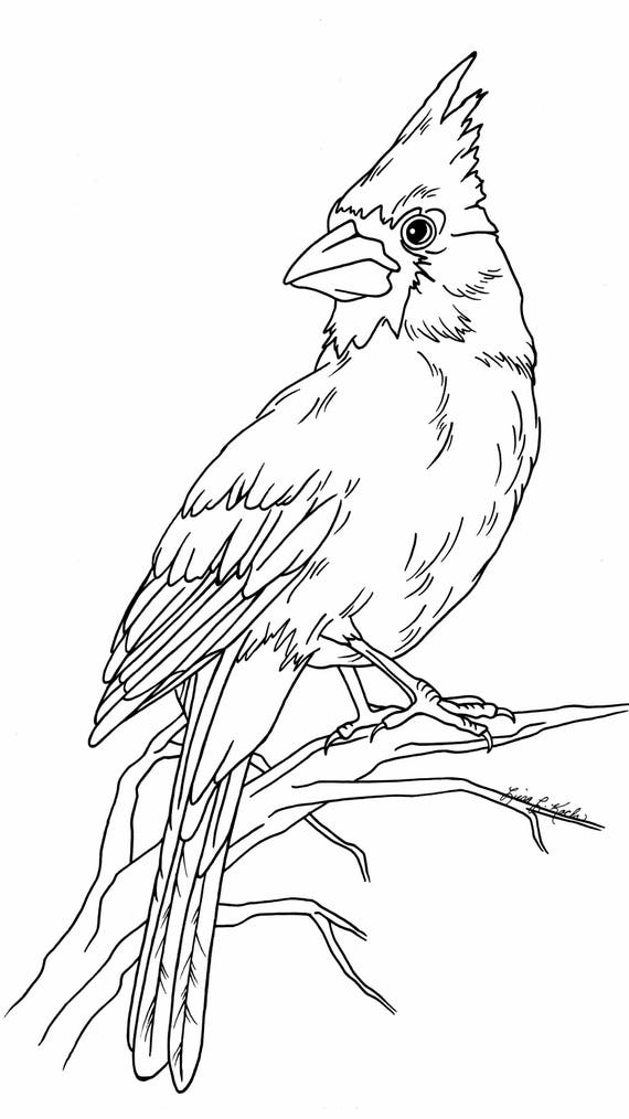Cardinal Coloring Page Etsy