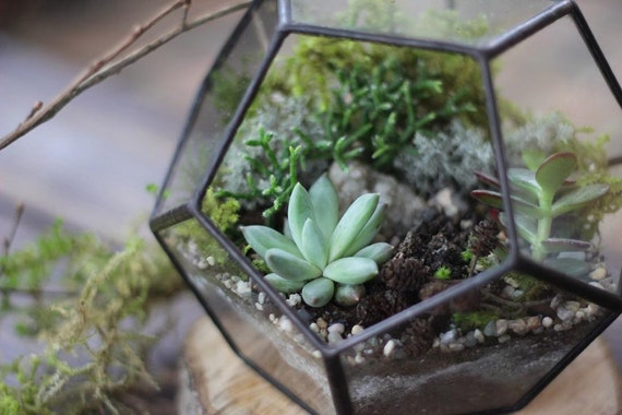 Terrarium Workshops Singapore
