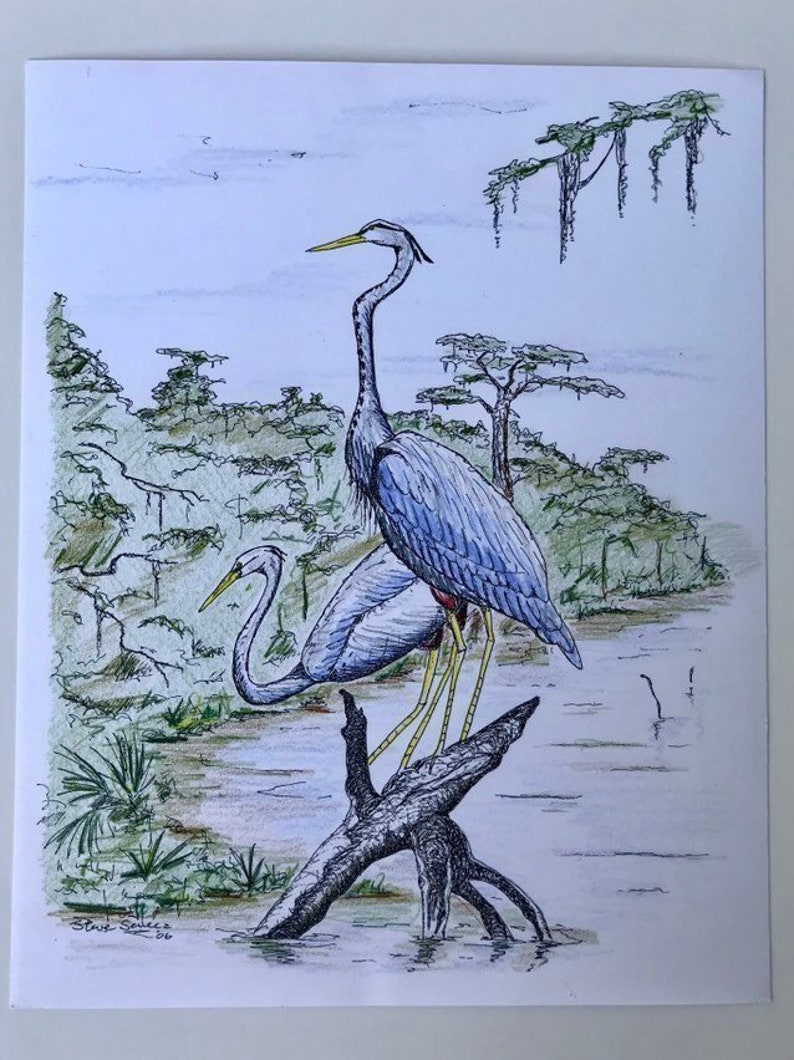 Blue Heron Bird Pen And Ink Drawing Louisiana Home Decor Swamp Art Print Louisiana Bird Art