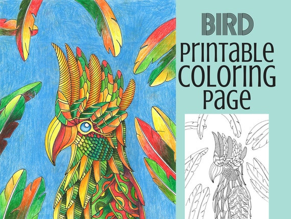 - Coloring Pages Bird Coloring Book Adult Coloring Pages Etsy