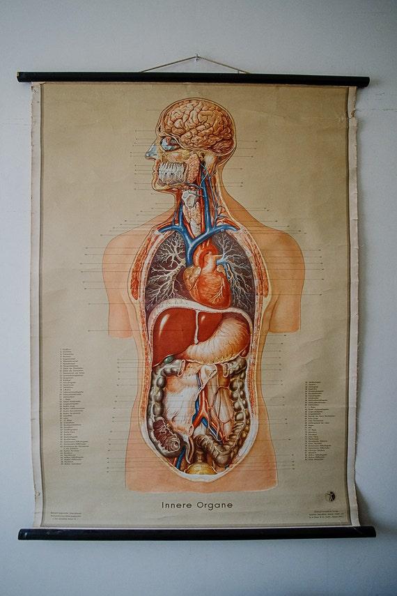 Ursprünglichen anatomischen Jahrgang deutsche pädagogische | Etsy