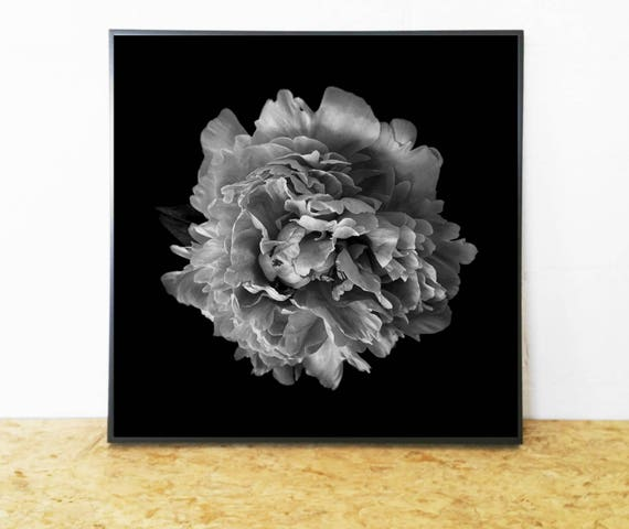 Beautiful Black and White Flower Photograph (Floral Photography Print) for Digital Download