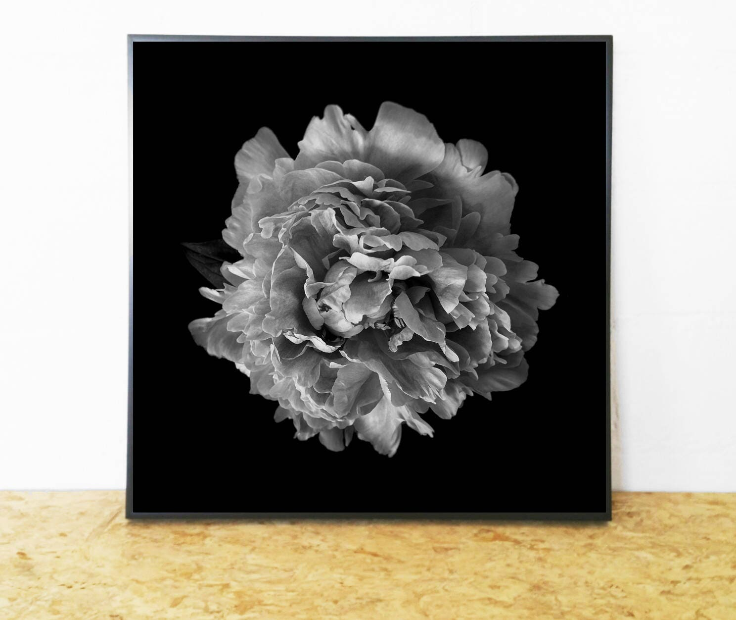 Beautiful Black And White Flower Photograph Floral Photography