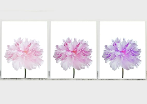 Pink Flower Art Prints and Wall Decor