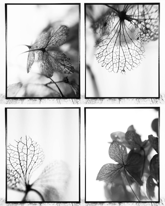 Set of 4 Photographs (Black and White Macro Photography) for Instant Download