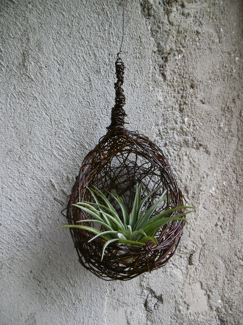 Les Tillandsias Filles De L Air medium tillandsia air plant, air girl pendant