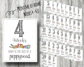 Printable Weekly Pregnancy Signs- Weeks 4-41 Black and White Countdown Prints- Instant Download Photo Props